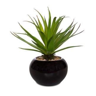 "7"" Mini Succulent w/ Pot"