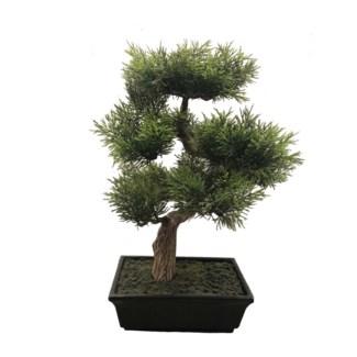 """16"""" Cedar Bonsai"""