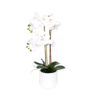 "22"" Real Touch Phalaenopsis Spray w/Pot"