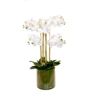 "28.5"" Real Touch Phalaenopsis w/Glass Container"