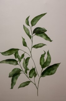 Leafly I