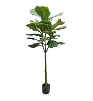5' Fiddle Tree