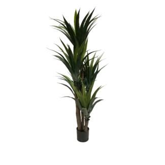 """63"""" Aloe Tree"""