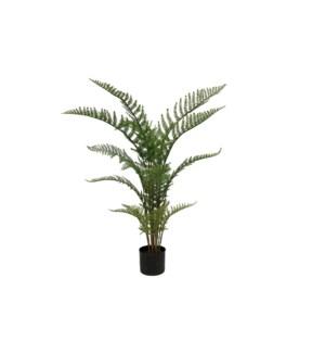 3' Fern Palm