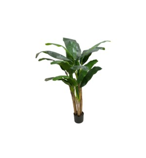 5' Banana Tree