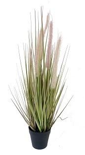 """Dogtail Grass - 21"""""""