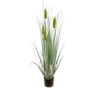 """48"""" Cattail Grass"""