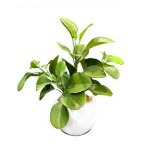 """12"""" Luey Succulent"""