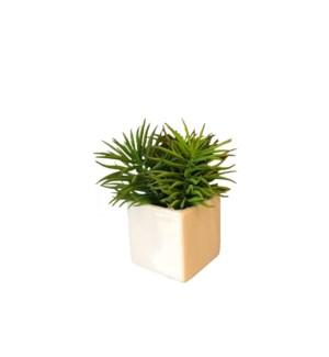 """7"""" Succulent"""