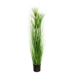 "47"" Pine Needle Grass In Pot"