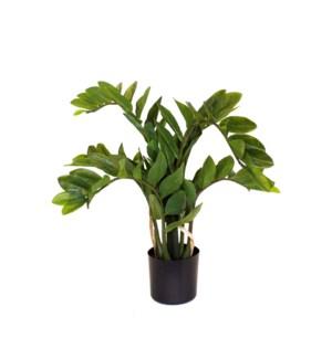 "27.5"" Potted Zamofilia Bush (116 leaves)"