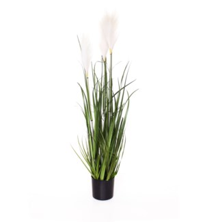 "39"" Grass Reeds in Pot"