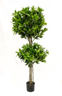 5' Shikiba Topiary