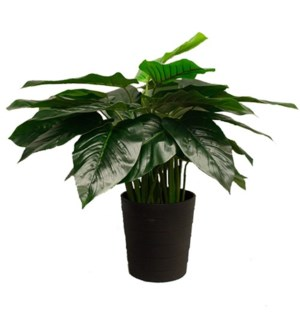 """26"""" Philodendron"""