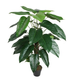 "41"" Philodendron w/Pole & Pot"
