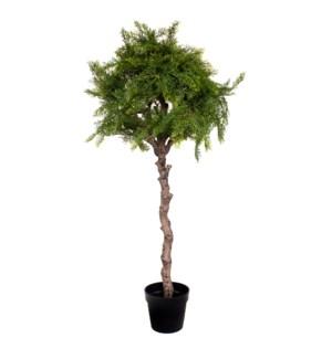 4.25' Pine Tree