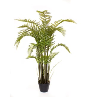4.75ft Tropical Fern