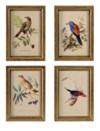 Wooden Bird Plaques - Set of 4
