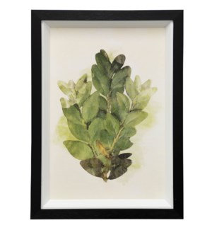 Garden Botanical II | 15in X 21in | Framed Print Under Glass