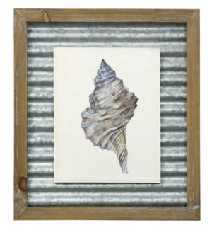 WATERCOLOR SEASHELL III | 16in X 14in | Made in the USA | Textured Framed Print