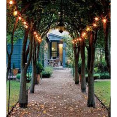 Savannah String Lights