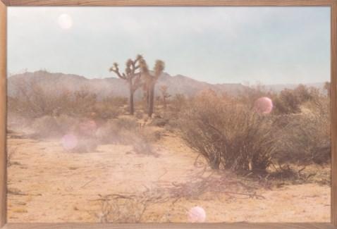 Mystic Desert