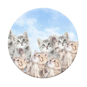 SKY KITTIES (6)
