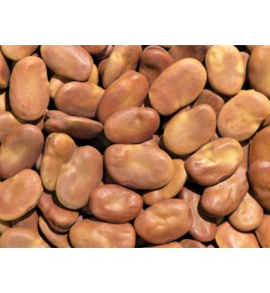 "Dry Large Whole Broad  Fava Beans (Bajella) ""Royal"