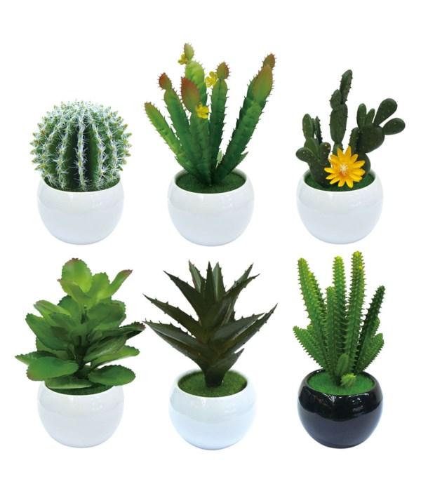 simulation cactus 12/96s