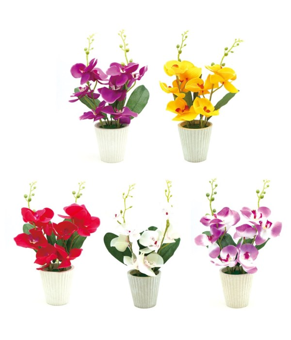 potted orchid astd clr 10/80s