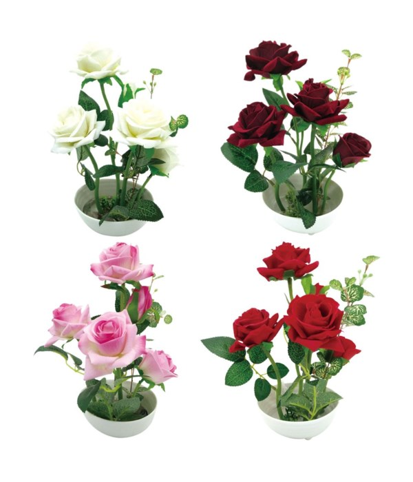 potted flower rose 12/48s