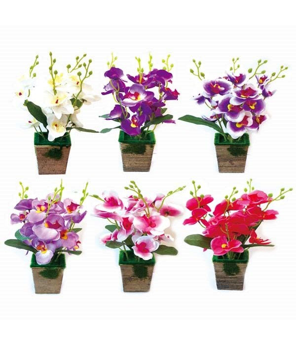 potted orchid astd clr 12/84s