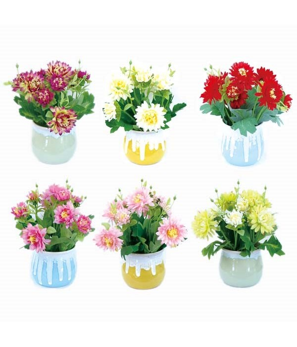 potted flower astd clr 60s
