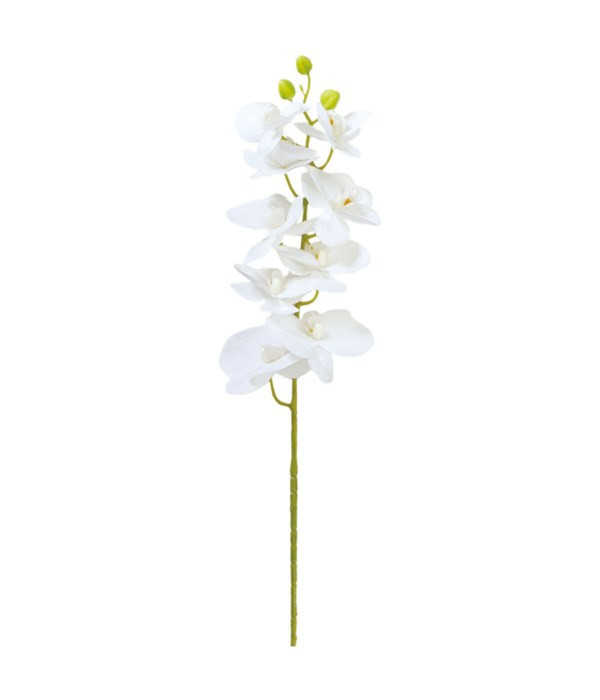 """38"""" orchid astd white 24/144s"""
