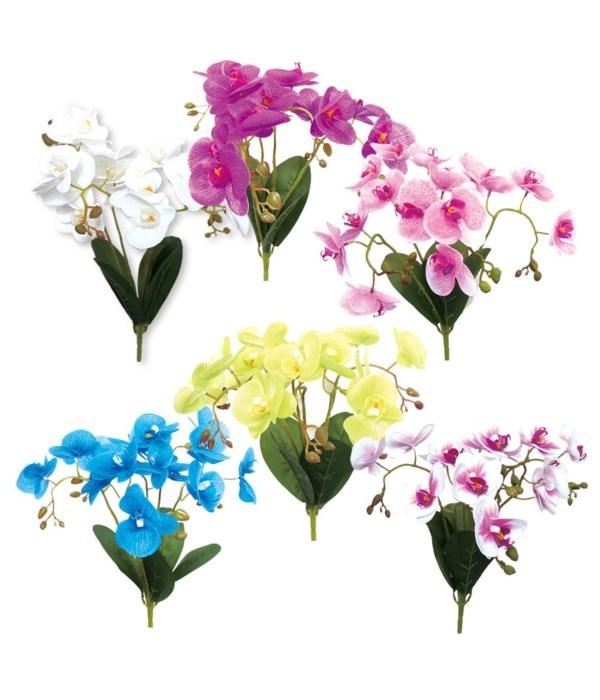 15-heads orchid astd clr24/240