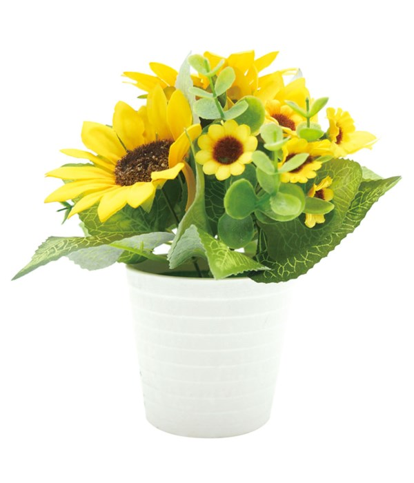 """9x8"""" potted sunflower 12/72s"""