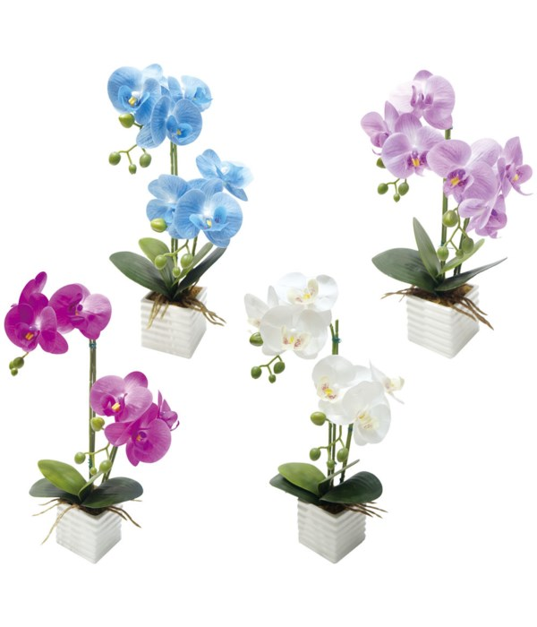 """16x9""""potted orchid astd 12/72s"""
