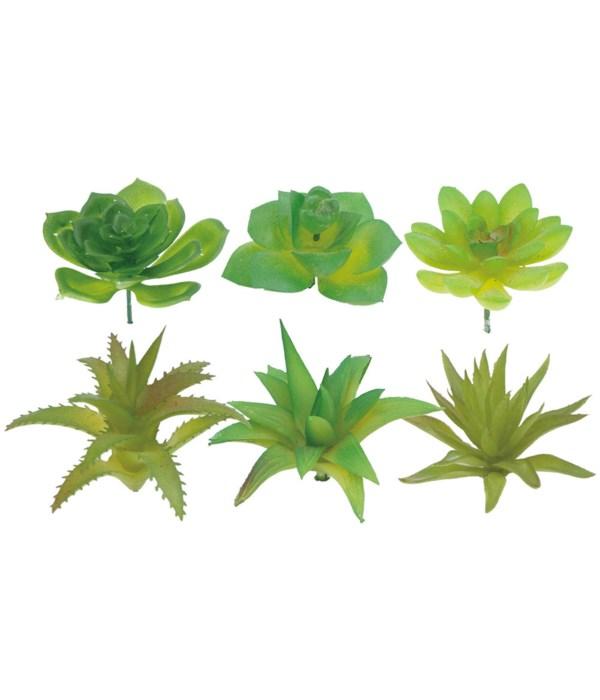 """2""""-4"""" succulents 12/960s"""