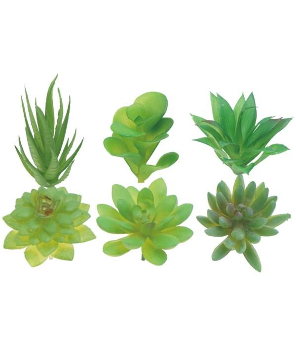 """2""""-4"""" succulents 12/480s"""