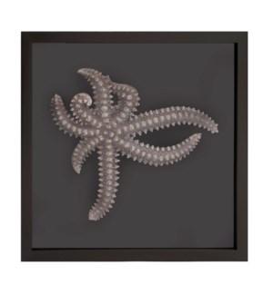 Star Fish Framed Art