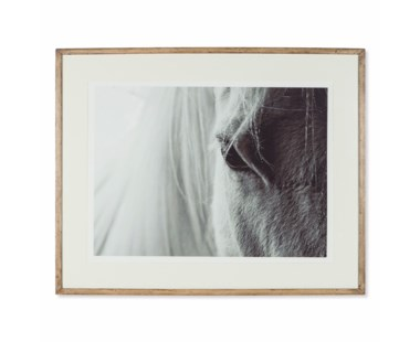 White Horse Anthro