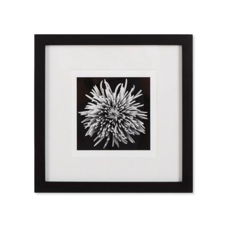 Black Blossom - D