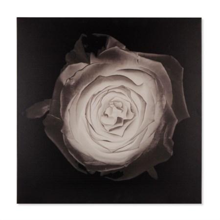 Rose - Kelly Hoppen