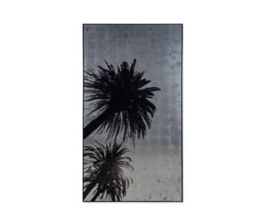 Silver Leaf Palm Tree - C