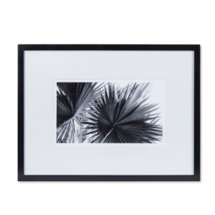 Black & White Palm Leaves - B
