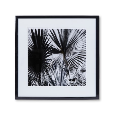 KH Black & White Palm Leaf  - Photography A