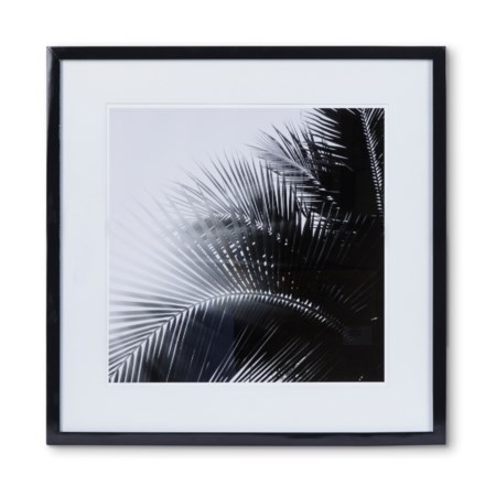 KH Black & White Palm Leaf  - Photography B