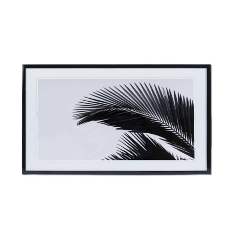 KH Black & White Palm Leaf  - Photography C