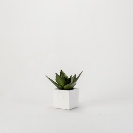 Aloe Plant in Concrete Cube