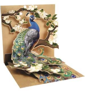 Peacock & Magnolias